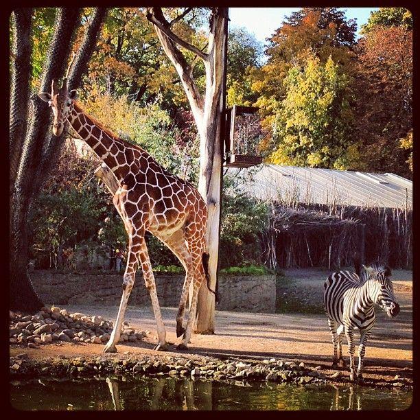 Zoo in Dresden, Sachsen