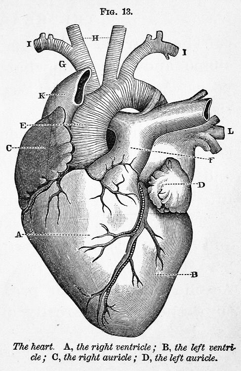 Pin By Natalie Baker On Invention Of Artificial Heart In 2019