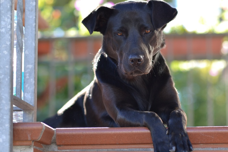 My dog Luli!