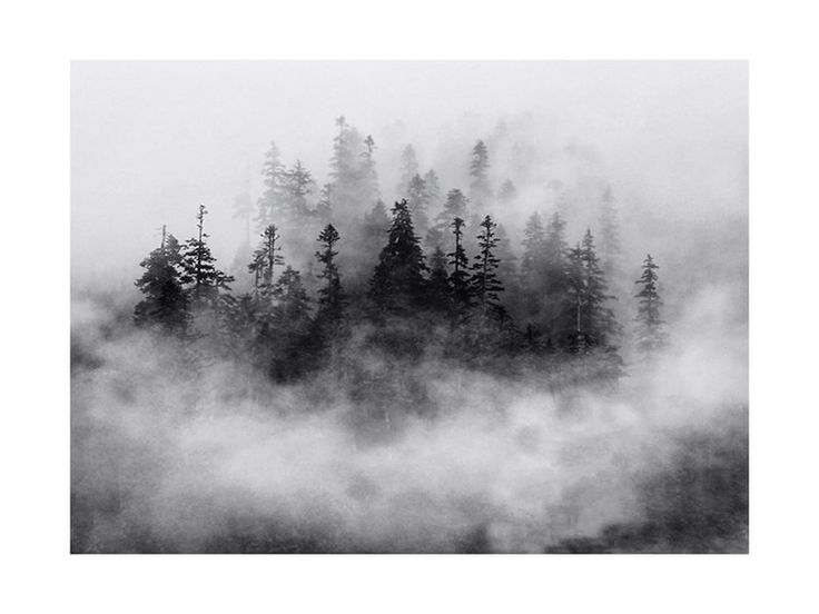 Click to see 'Lost in the Fog' on Minted.com