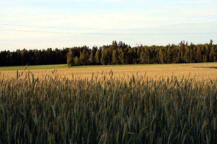 Fields in Nukari (Nurmijärvi), Finland