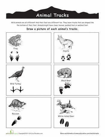 Worksheets: Wild Animal Tracks