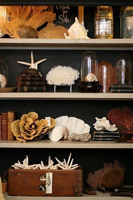 Collection display... coastal curiosities