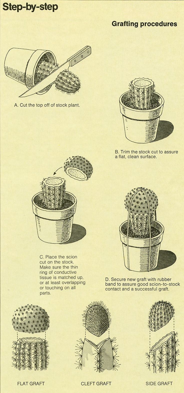 grafting cacti  (just in case. I'm not a cactus person, really.  my spines are all on the inside. ;)