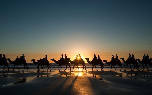 Обои Караван верблюдов с наездниками идет через пустыню во время заката