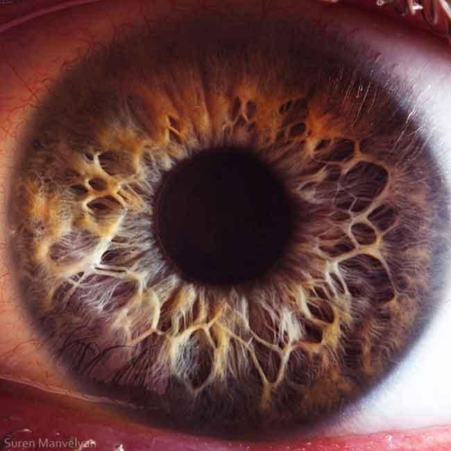 Extreme Close Ups of the Human Eye