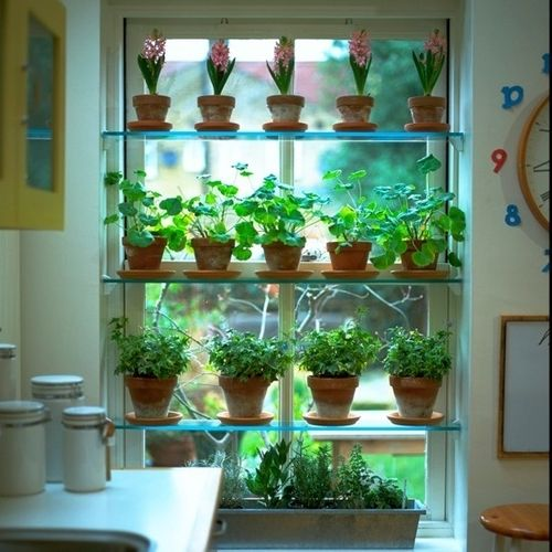 Great idea - using glass shelves inside your kitchen window to grow herbs on. The glass shelves don't block the light from coming into the room, the herbs get as much daylight as possible being by the window, and they're close to hand when cooking!