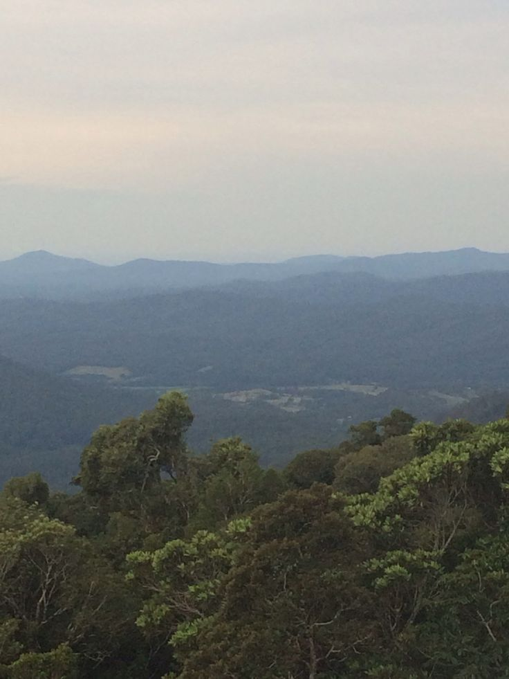 View from treetops at dorrigo