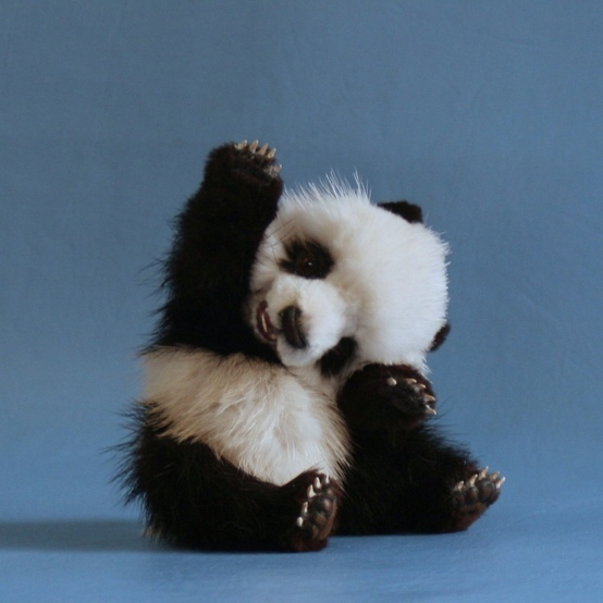 am I the sweetest panda ever?