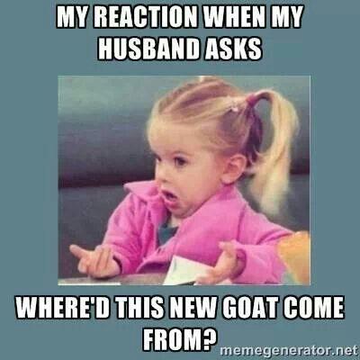 HA #babygoatfarm #goatmemes