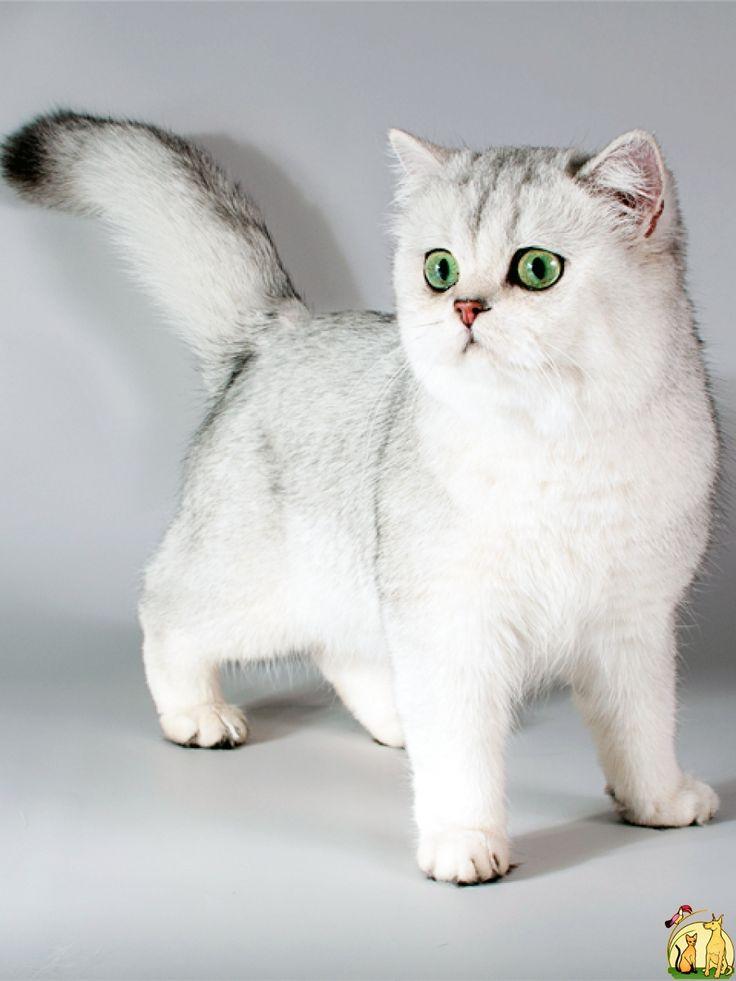 Питомник кошек UA*Leo San