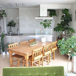 chihomilkさんのキッチン,観葉植物,ナチュラル,植物,グリーン,インテリア,リビング,ベンジャミン,シンプル,ナチュラルインテリア,ウンベラータ,植物のある部屋,カフェみたいな暮らし,アイランドキッチン,くつろぎ空間,ステンレスキッチン,カフェ風インテリア,インドアグリーン,ミックスインテリア,植物のある生活,グリーンのある暮らし,吹き抜けのある家,アルギュ,植物のある暮らし,クリナップ SS ,ボタニカルインテリア,ソフトジャングル,ボタニカルデコについての部屋写真