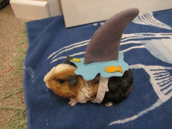 Hedgehog /  Guinea pig Shark costume on Etsy, $7.95