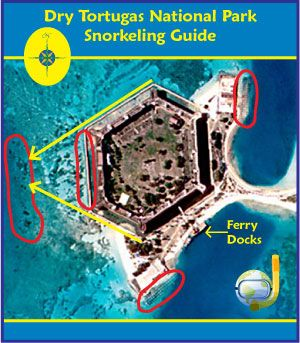 Snorkeling Dry Tortugas National Park - The Best Near Key West