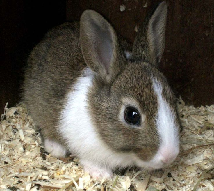 A Horse Of Course, And Rabbits Too: Pictures of baby rabbits