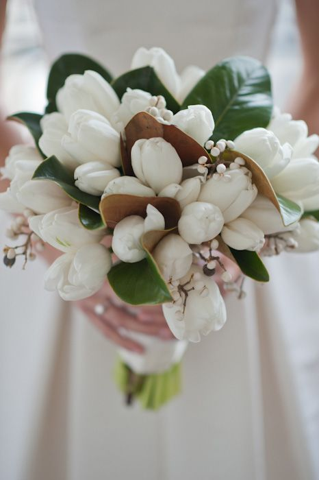 tulips, tallow berry  & magnolia leaves