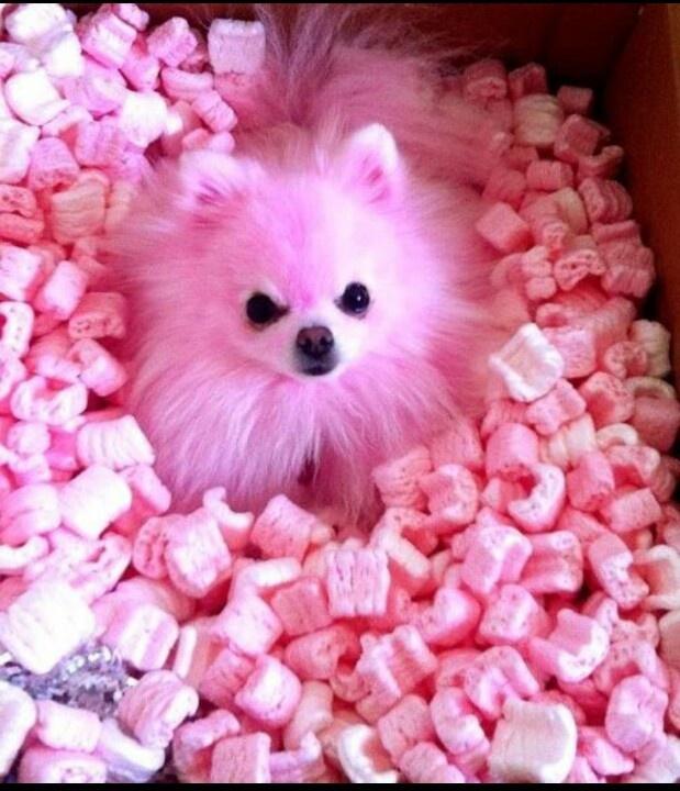 Jeffree stars fabulous dog! 3 cositas Pinterest