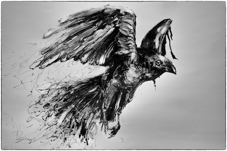 raven (ink) Dariusz Zapała