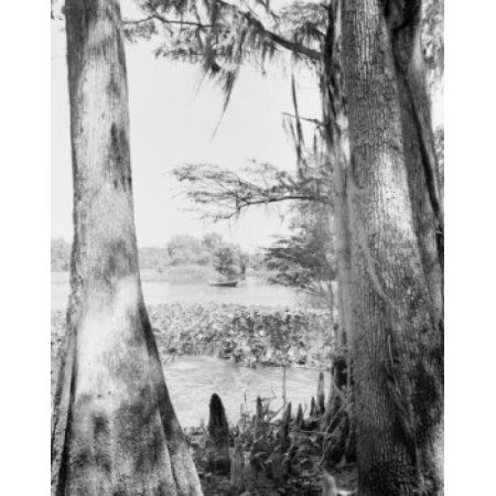 USA Fishing on Suwannee River Canvas Art - (24 x 36)