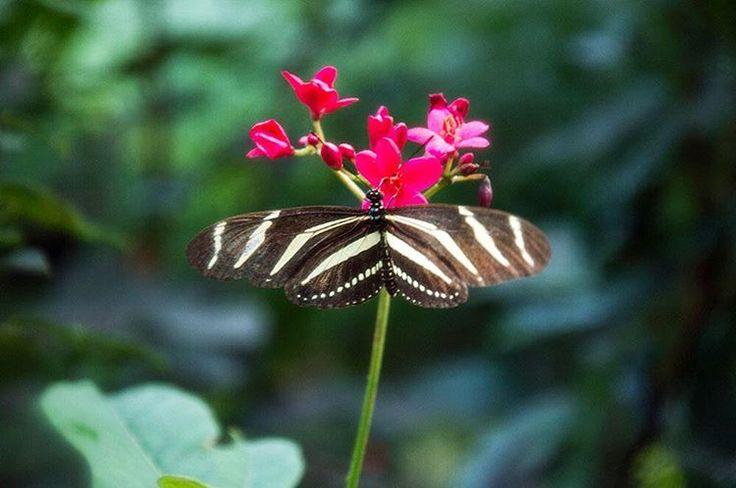 Vlinders in Wildlands Adventure Zoo in Emmen 🌺 - Instagram @Stadsblogger
