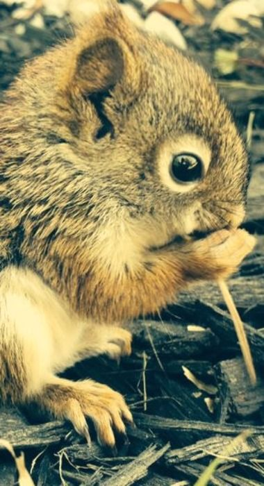 pin by lauri bernard on what are you nutz squirrel cute animals