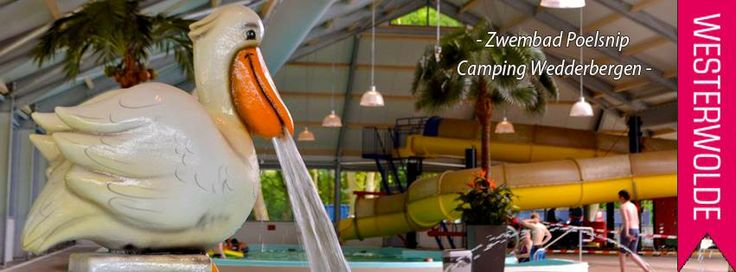 Waterspuwende pelikaan in  zwembad Poelsnip op camping Wedderbergen...echt cool!