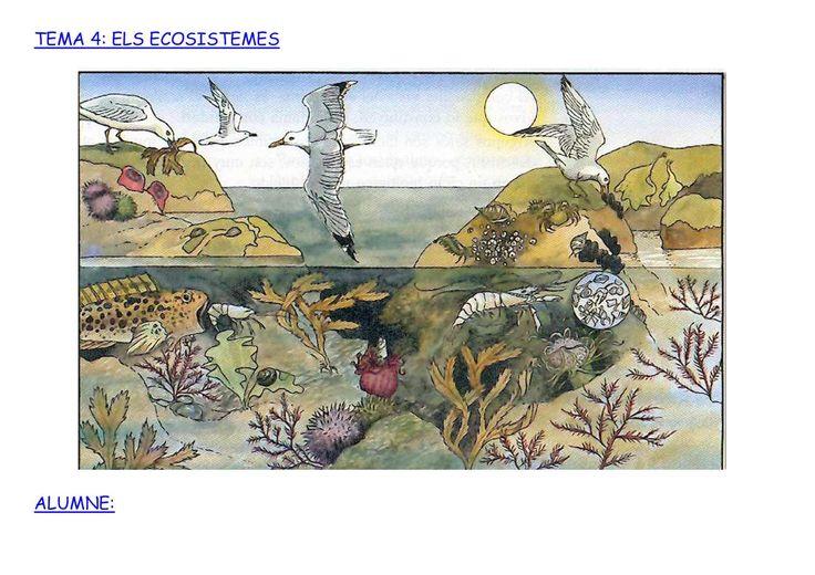 Els Ecosistemes Dibuixos
