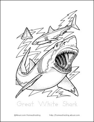 learn about sharks with free printables