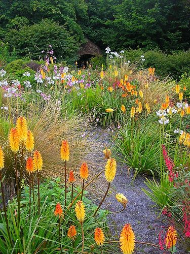 Kniphofias (Red Hot Poker plants) grow along with other herbaceous plants in the grounds of the Garden House (near Buckland Monachoram) in South Devon.  - by Markles55, via Flickr