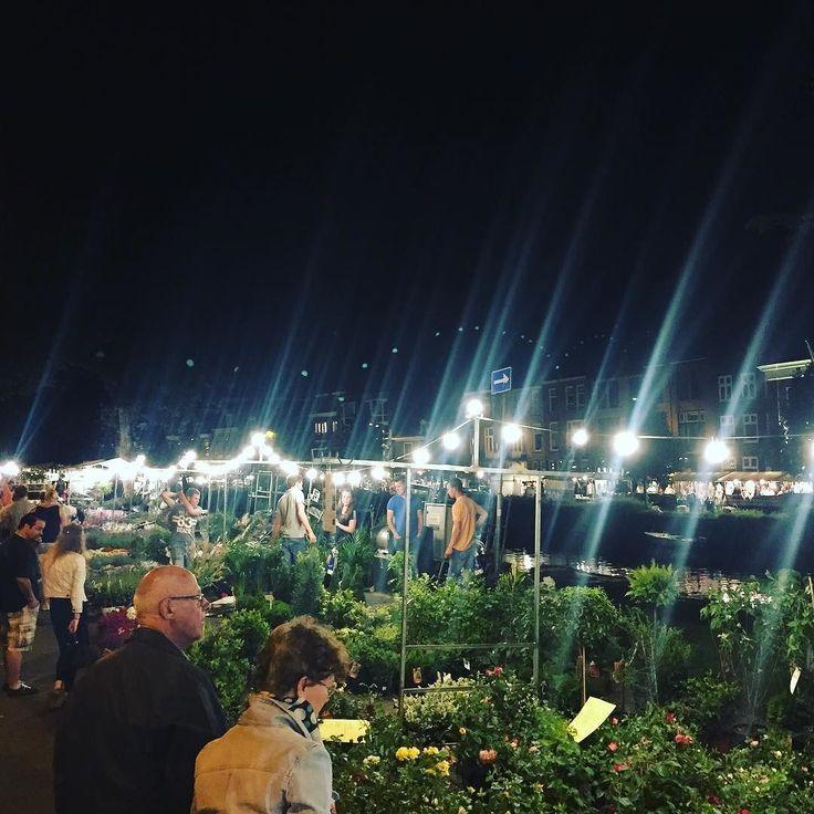 De beroemde Luilakmarkt! Je hebt nog de hele nacht om mooie potjes en plantjes in te slaan..!  Fijne nacht! #luilak #luilakmarkt #markt #nachtmarkt #potjes #plantjes #bloemen #groen #raamvest #raamsingel #haarlem #haarlemcityblog #pinksteren