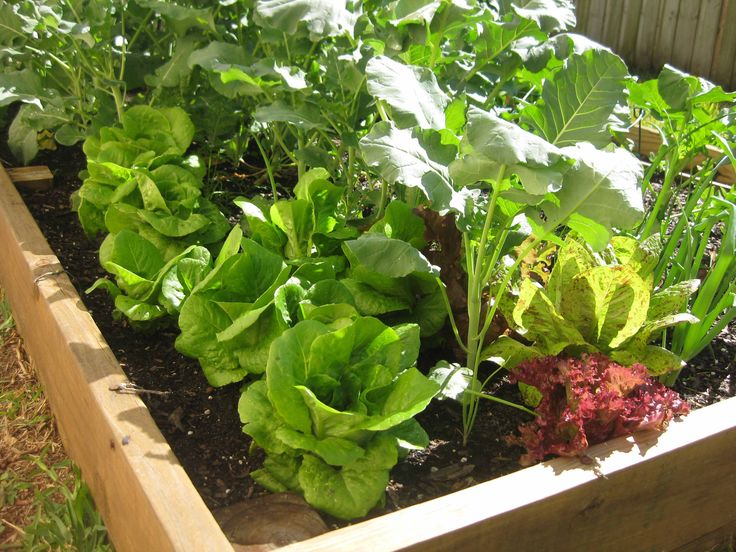 scroll about 3/4 down...Ten Florida Gardening Websites-Now that summer's over and it will soon stop hitting 90 daily, it's time to think about gardening!