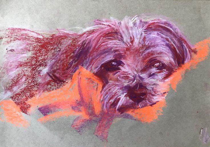 Yentl3. Oil pastel drawing - A3 size. Norfolk terrier. Dog portrait
