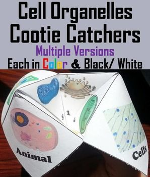 These cootie catchers are a great way for students to have fun while learning about cell organelles. Playing directions and folding Directions (with pictures) are Included.