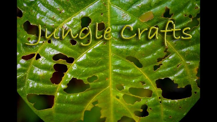 Jungle Crafts! - People Of The Jungle Craft With Plants https://youtu.be/AmU9dNwrZ0M . how to make your own #crafts follow @cutephonecases
