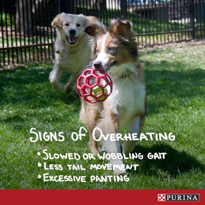 Summer dog safety tip: Keep your dog from overheating this Summer by keeping an eye out for these signs!
