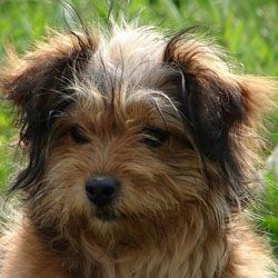 Female Puppy Dogs Deserve A Great Name And Its Best To Find Within