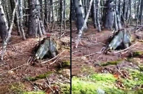 Planeta Terra AGONIZANDO? Terra se Move em Floresta na Nova Escócia Canadá!!
