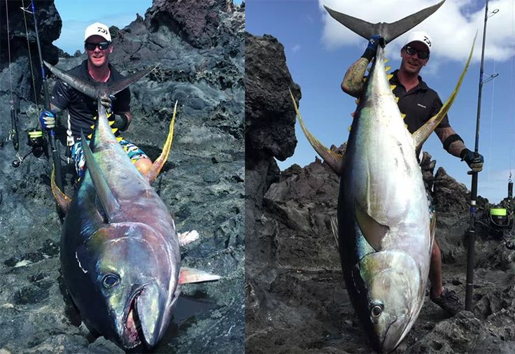 World record yellowfin tuna off the rocks Tuna fishing