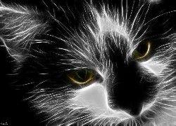 Kotek, Zielone, Oczy, Czarno, Biały