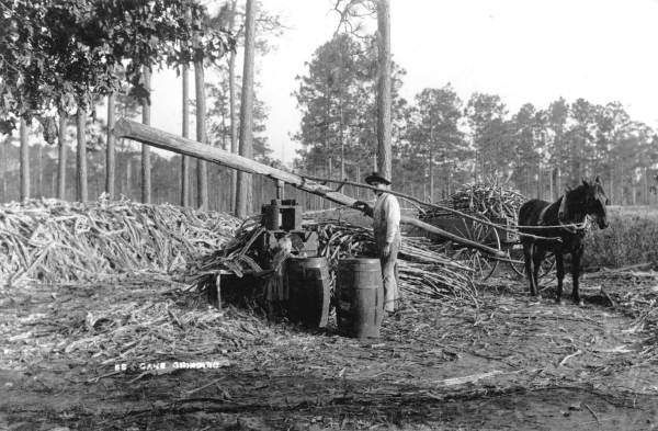 Persistent URL: www.floridamemory.com/items/show/30395   Local call number: RC07279   Title: Cane grinding - Florida    Date: ca. 1890   Physical descrip: 1 photoprint - b&w - 8 x 10 in.   Series Title: Reference Collection   Repository:  State  Library and Archives of Florida, 500 S. Bronough St., Tallahassee, FL  32399-0250 USA. Contact: 850.245.6700. Archives@dos.myflorida.com