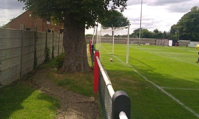 Tree on a terrace...Tring Athletic