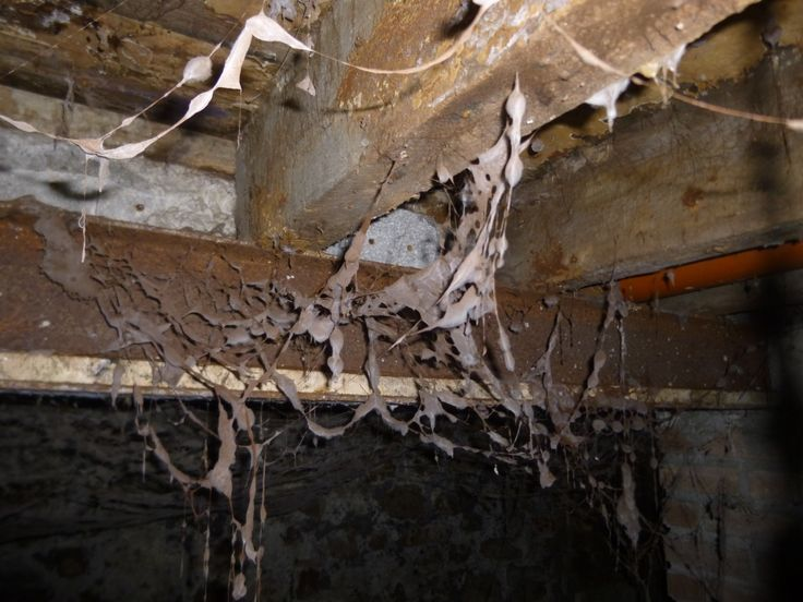 Dry Rot Attack In Basement Cardiff Rot Dried Basement