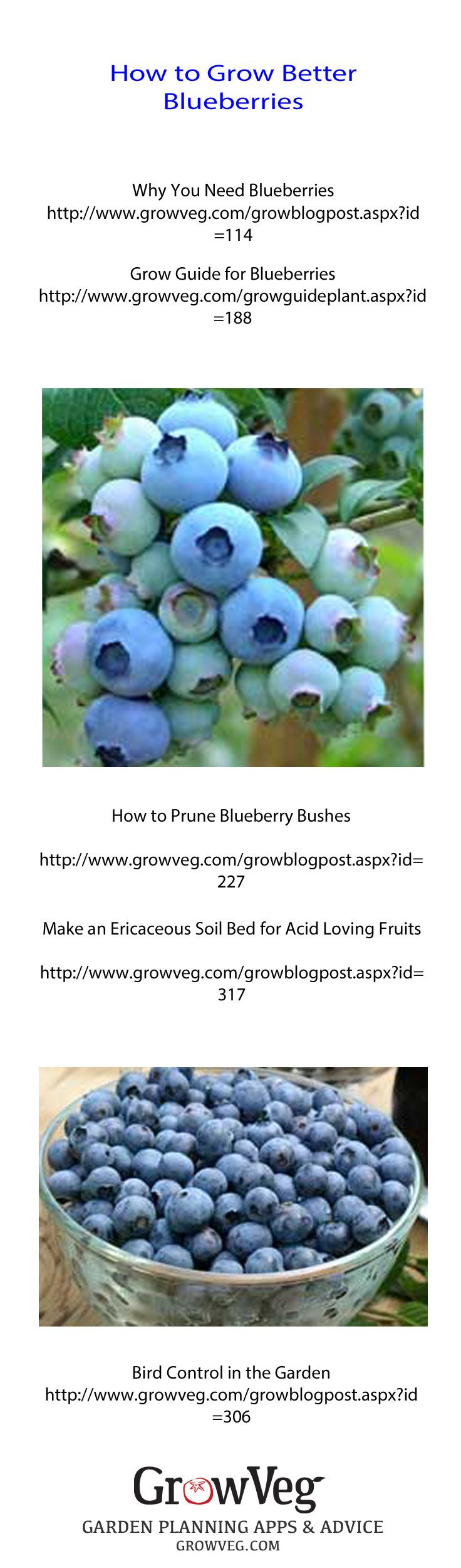 How to get your soil right, to stop bird damage and grow heaps more blueberries…