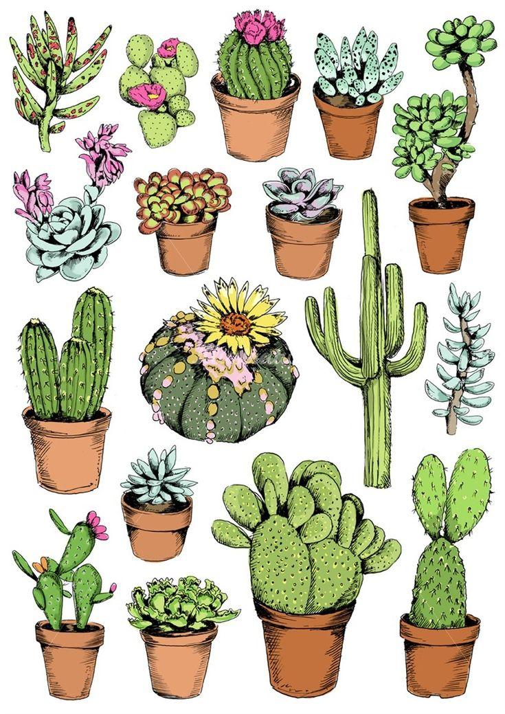 Cactus illustration by May van Millingen