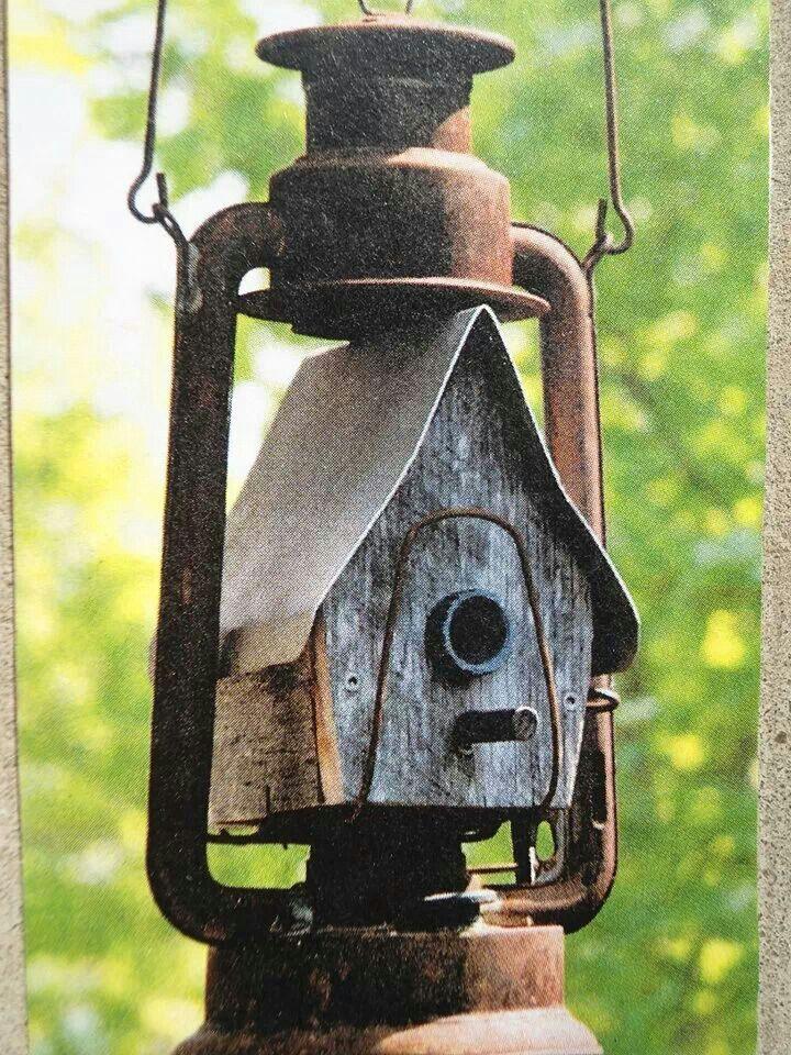 Birdhouse in a rusty  lantern.