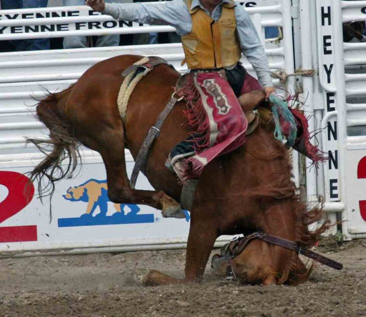17 Best Images About Boycott Rodeo On Pinterest