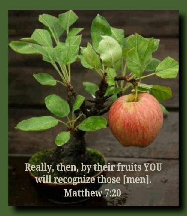 Matthew 7:20 - By their fruits!
