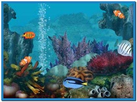 free saltwater fish screensaver