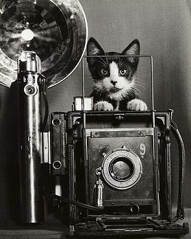 Tiddles, the little known cat photographer....