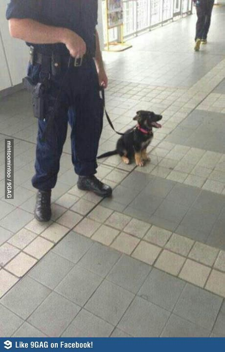 One day, I'll be a big police dog!
